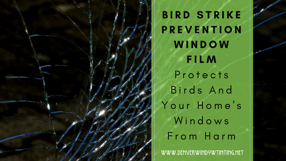 bird strike film denver