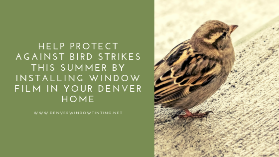 bird strike window film denver
